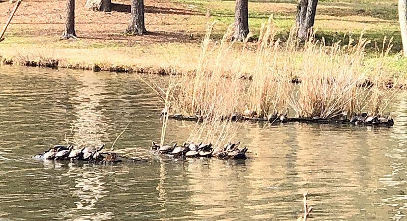 Turtles5720
