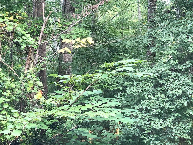 Woods6609