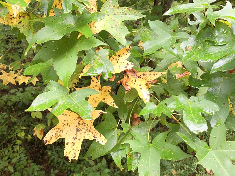 Leaves6769