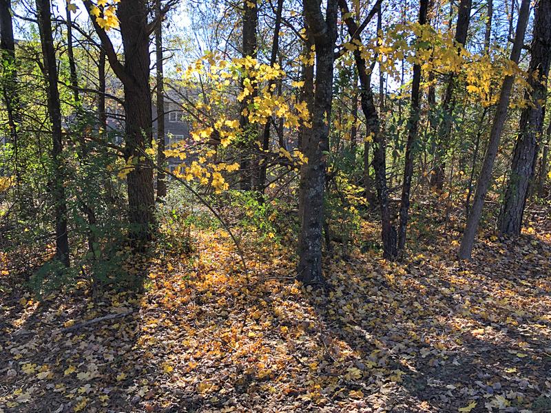 Trees7140