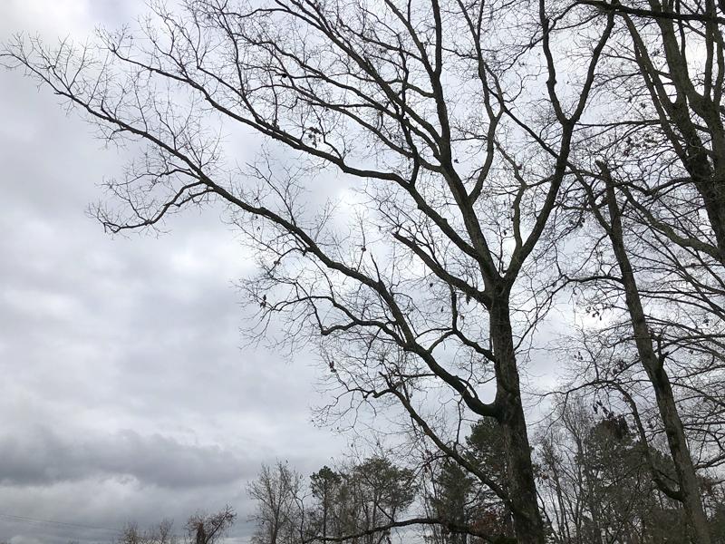 Trees7377