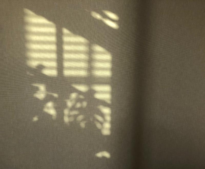 Shadows7980