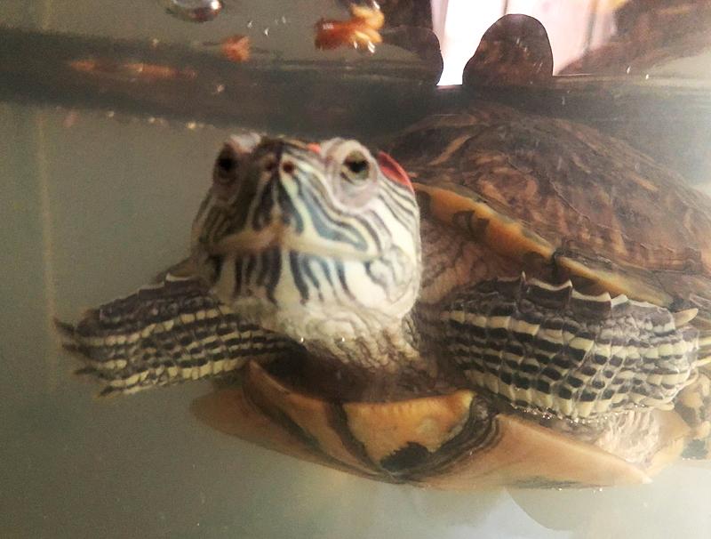 Turtle6347
