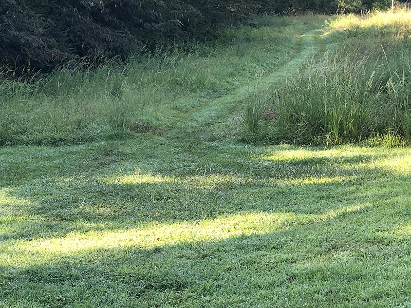 Grassy6745_edited-1