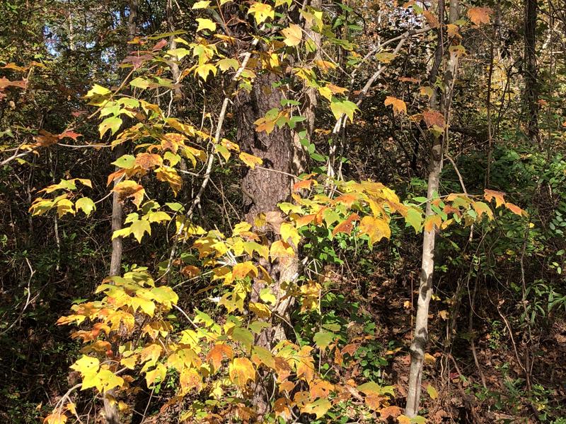 Leaves7092