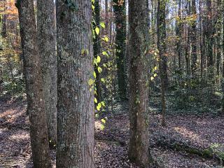 Trees7189
