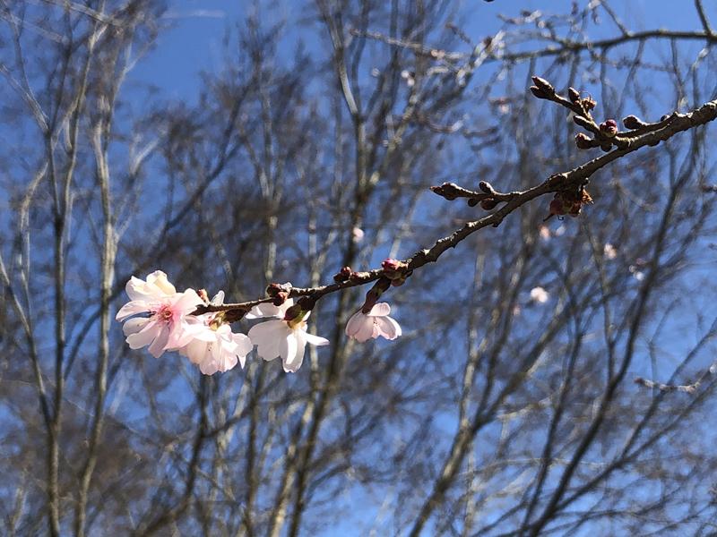 Blossomsontrail7749