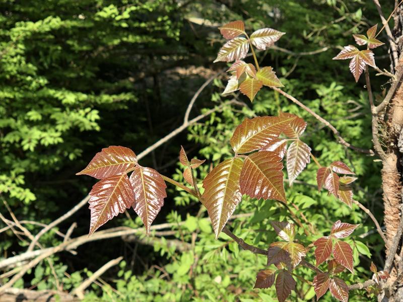 Leaves7862