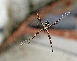 Spider0886