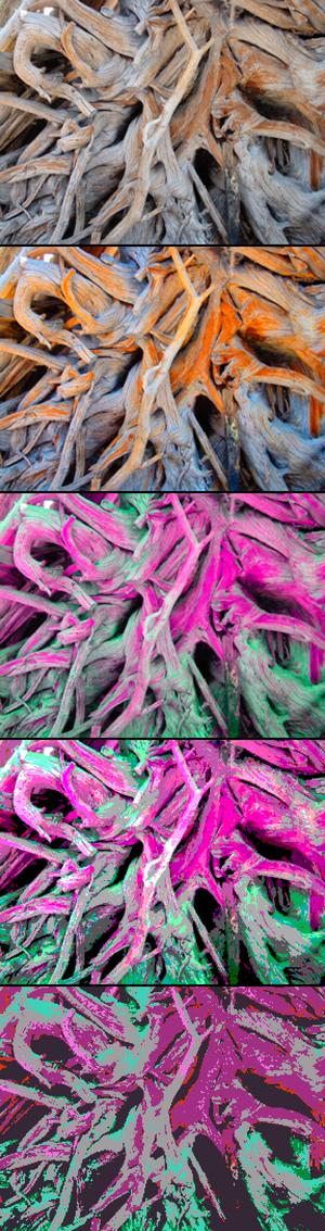Rootssteps_2