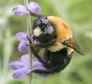Bee9191